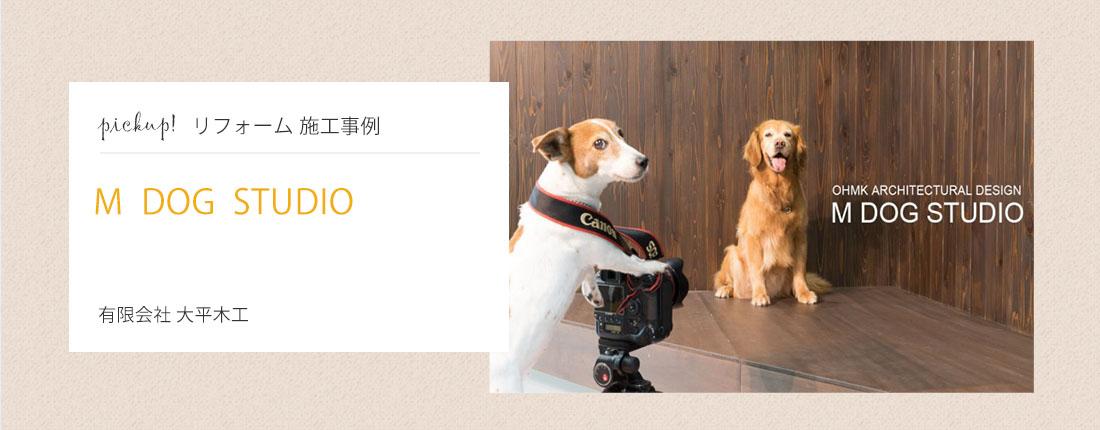 M DOG STUDIO